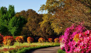 En färglad trädgård